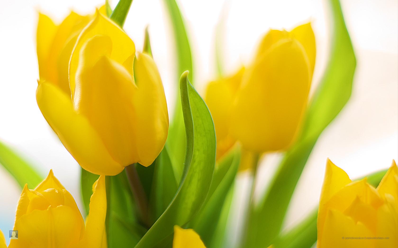 Spring flowers india prashant mendiratta spring gardeners and flower lovers often overlook spring flowers 1 mightylinksfo